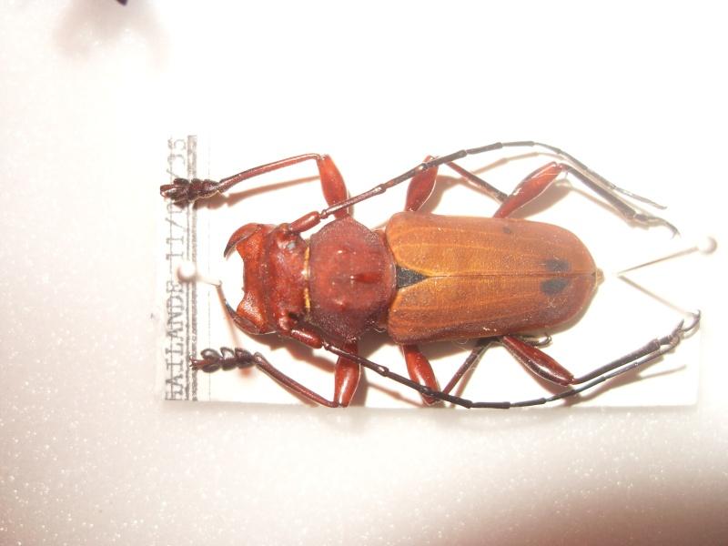 Présentation des collections Entomologiques - Page 2 Sdc16019