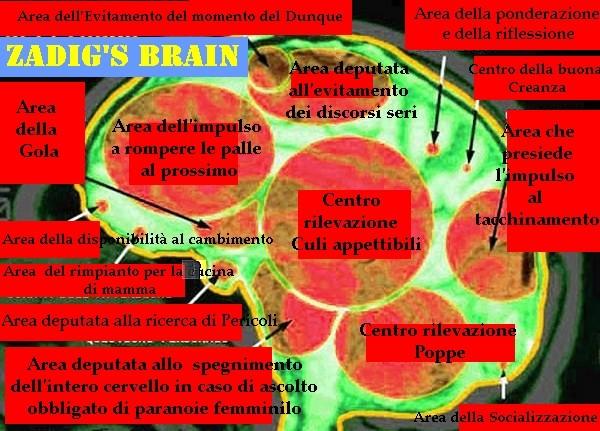La Struttura Cerebrale degli Utenti della Valle dell'Eco - Che dico Super Quark...... STRA-QUARK Cervel10