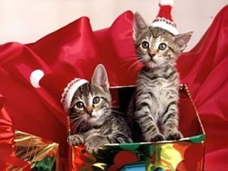 Le Origini del Natale e dei suoi Simboli: Babbo Natale, l'Abero di Natale  e tutti gli altri Immagi10