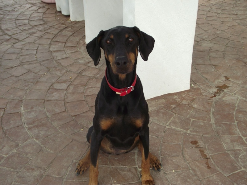 WANTED  home for two dogs Daisy10