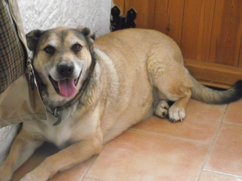 WANTED  home for two dogs Mickey10