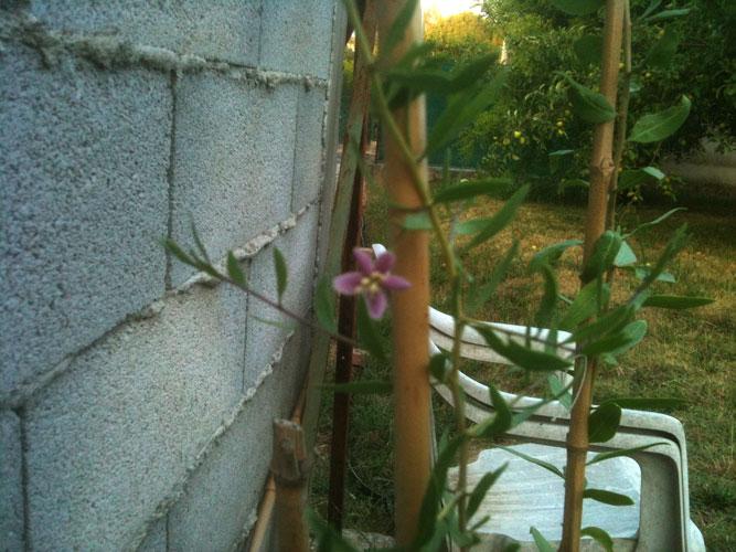 Demande d'aide pour plants Goji - Page 3 Img_0413