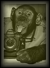 8/25 A Picture is Worth a Thousand Words - Page 2 Chimp10