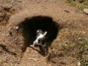 9/4 Common Denominator - (a picture prompt) Dog10