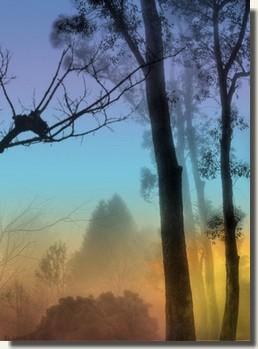 Into The Mist Treemi10