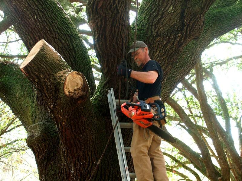LumberJackin' Treewo10