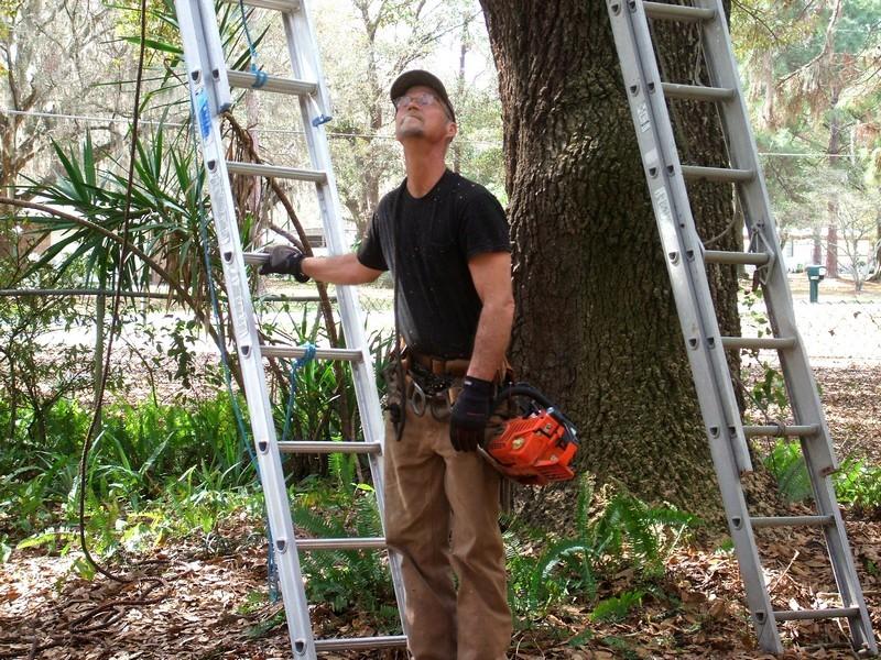 LumberJackin' Treewo11