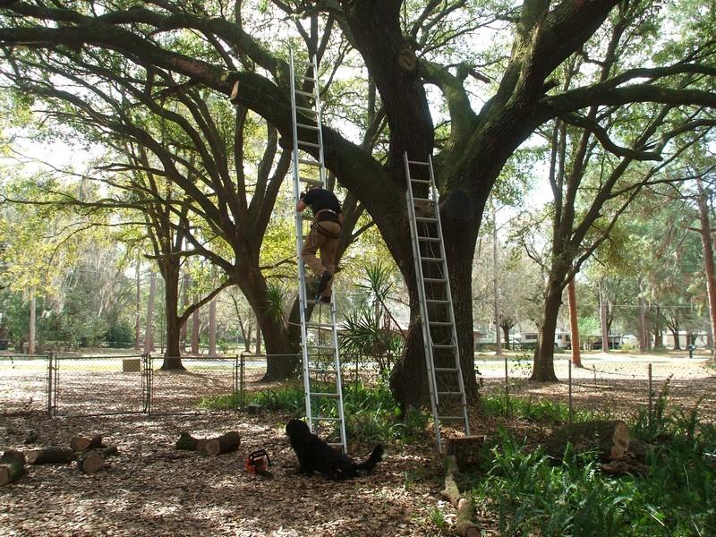 LumberJackin' Treewo12