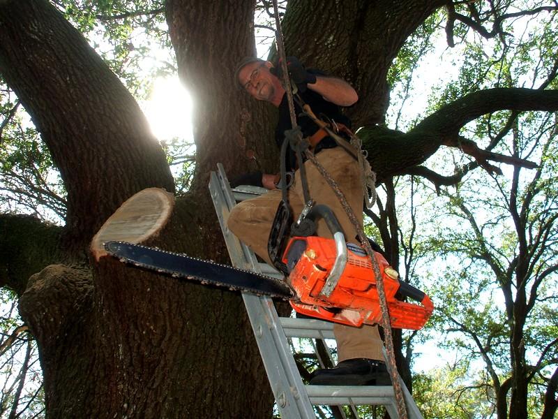 LumberJackin' Treewo14