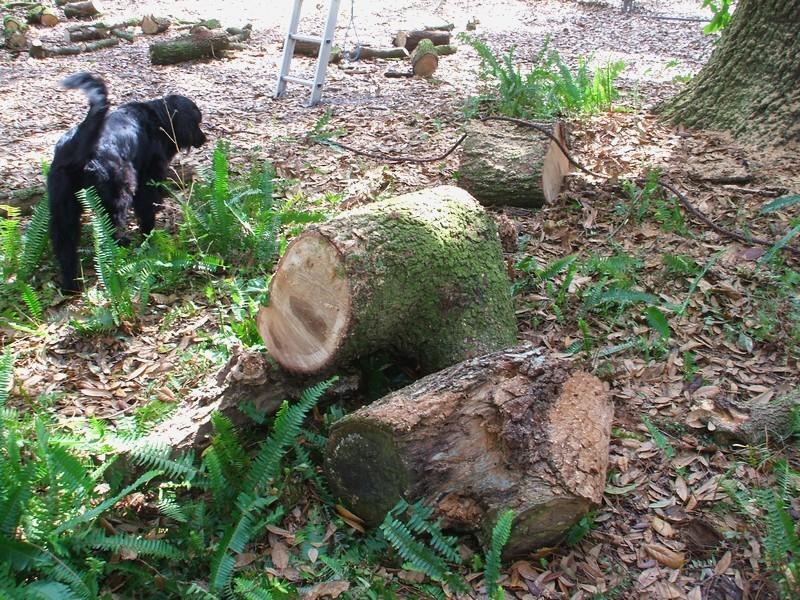LumberJackin' Treewo15