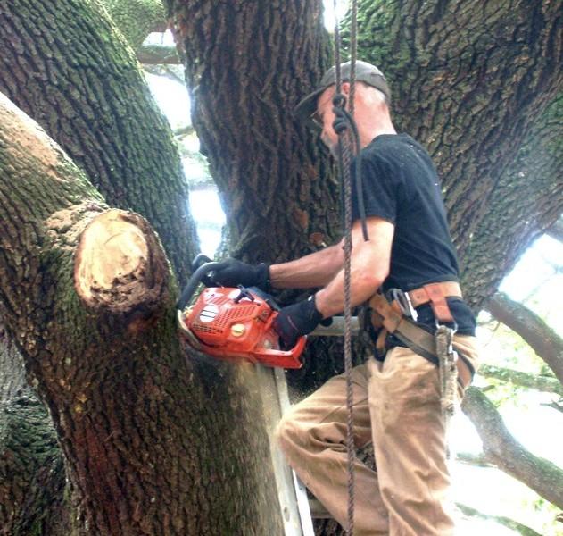 LumberJackin' Treewo20