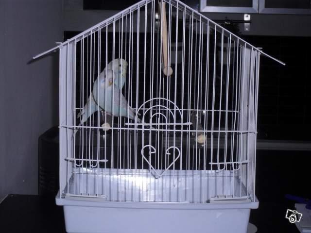 Détention d'oiseaux. 00602710