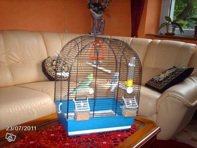 Détention d'oiseaux. 00813210