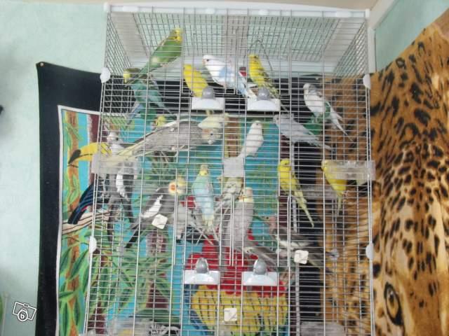 Détention d'oiseaux. 00897410