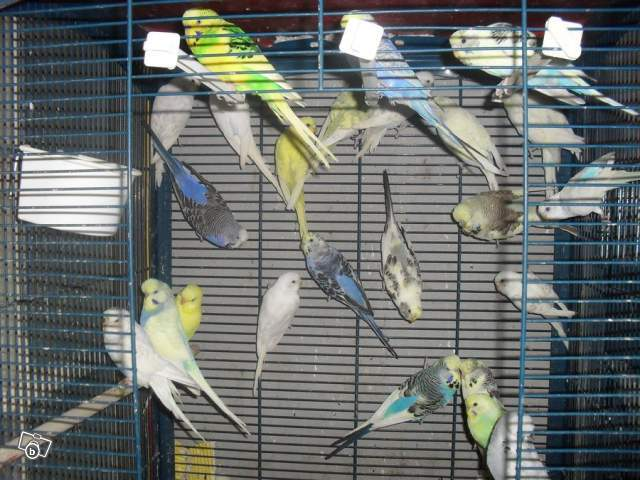 Détention d'oiseaux. 96010711