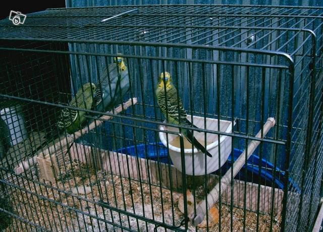 Détention d'oiseaux. 97646411