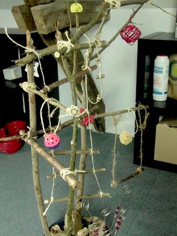 Un arbre à Perruches !!! - Page 5 Cimg9318