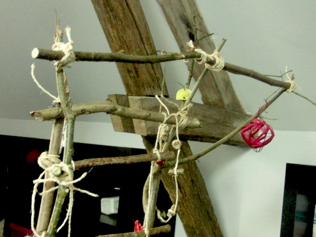 Un arbre à Perruches !!! - Page 5 Cimg9320