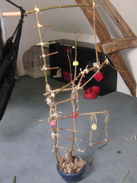 Un arbre à Perruches !!! - Page 5 Cimg9337