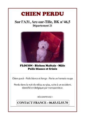 FLOCON PERDU DANS LE 21 Poster10