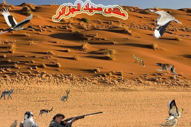منتدى صياد الجزائر