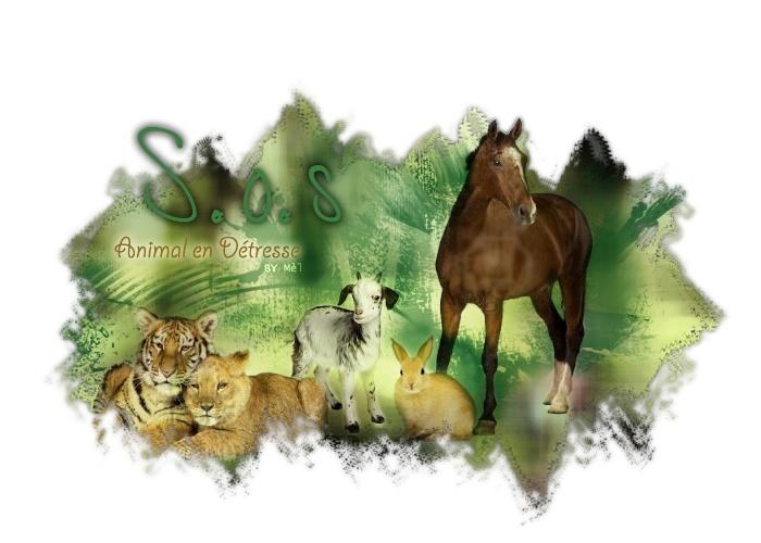 S.O.S Animal en Détresse