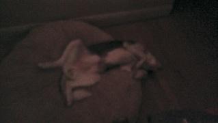 Show me your sleeping husky! Imag0410