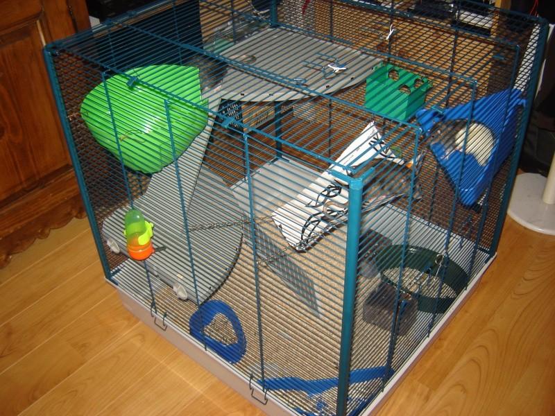 Vends cage furet XL+parc à rats Bas-Rhin 67 Dsc00911