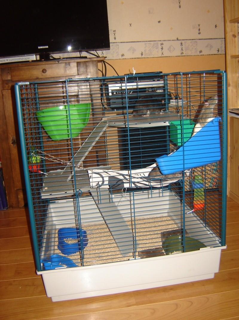 Vends cage furet XL+parc à rats Bas-Rhin 67 Dsc00915