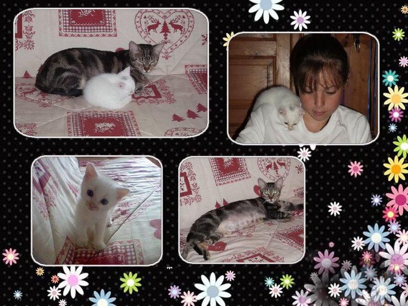 Nos petites bêtes et nous... - Page 4 Diva-s10