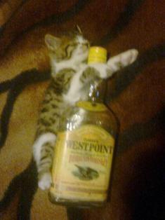 Do you like my kitty? 31954710