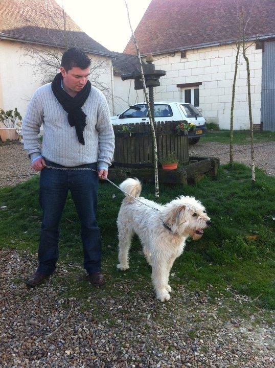 chien - Berger catalan à adopter Marc_e10