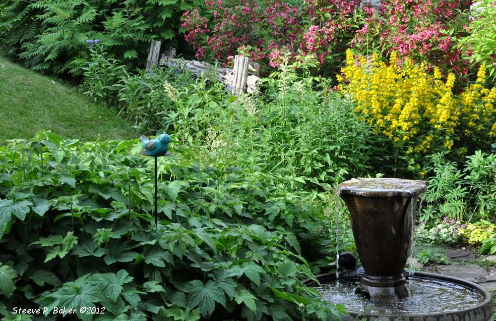 Notre jardin (23 juin 2012) Srb_0616