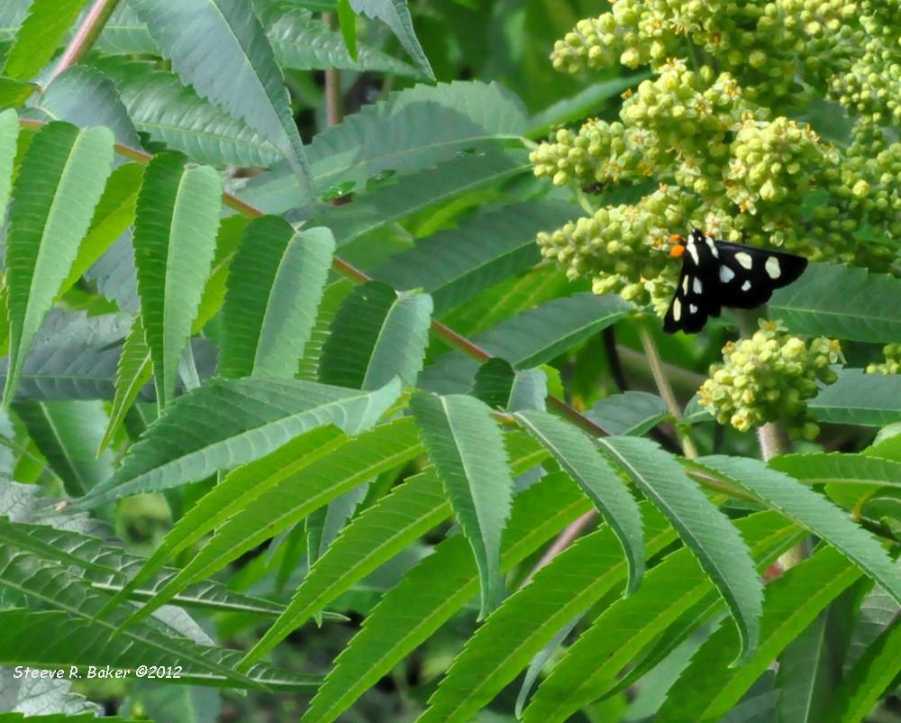 Notre jardin (23 juin 2012) Srb_0617
