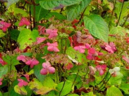 Couleurs d'automne Hydran12