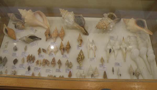 Musée du coquillage de Raiatea - Page 3 P1011738