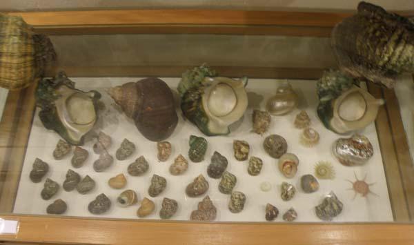 Musée du coquillage de Raiatea P1011740
