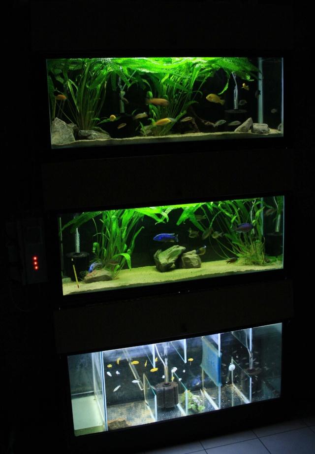 batterie d'aquarium - Page 2 Sans_t13