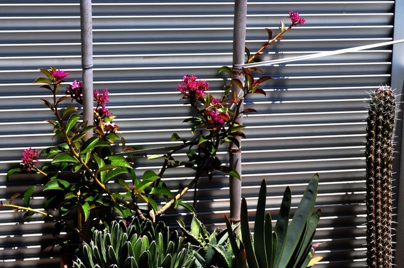 floraisons de chez Xata - Page 11 01115