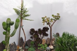 Crassulaceae - identifications et questions [verrouillé] 25_set15
