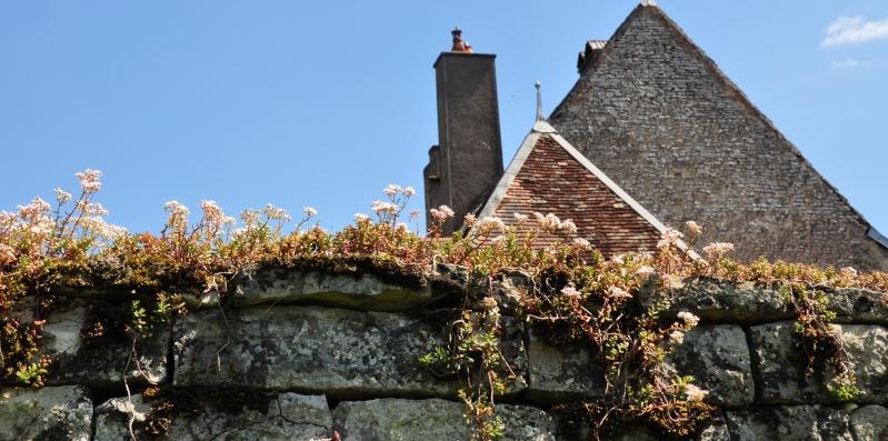 flore des vieux murs, rochers  et rocailles naturelles Gy_03710