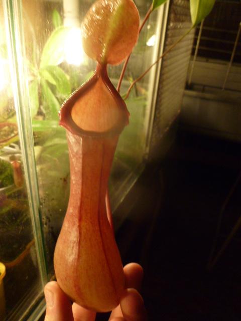 quelque plante (photo) P1040123