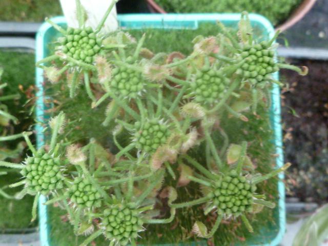 quelque plante (photo) P1040211