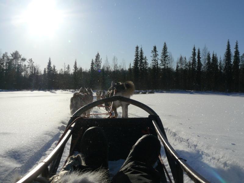 voyage en laponie finlandaise inoubliable !!!  P1050012