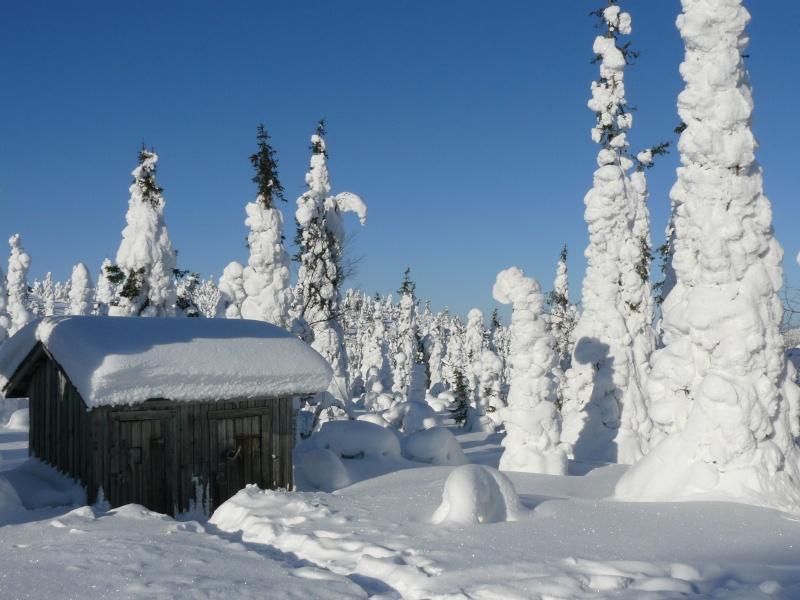 voyage en laponie finlandaise inoubliable !!!  P1050110