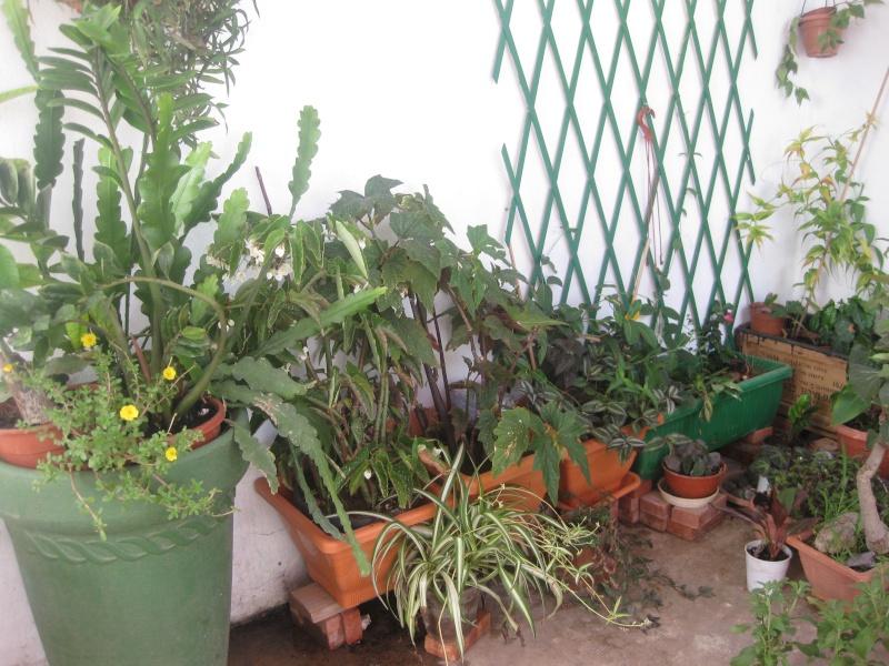 jardin en pot et a l ombre  Plante11