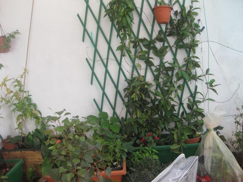 jardin en pot et a l ombre  Plante12