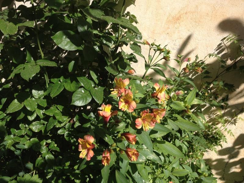 quelques fleurs ... Roses_16
