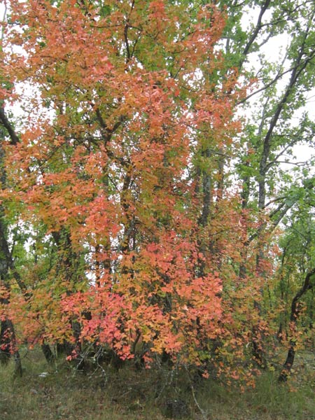 19 -  Concours 'Champignons&couleurs d'automne'......photos reçues !!! 1_copi12