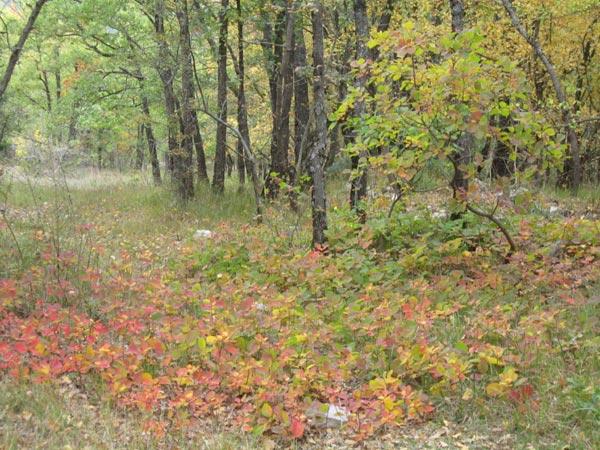 19 -  Concours 'Champignons&couleurs d'automne'......photos reçues !!! 7_copi13